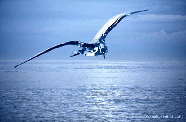 bird_glass_ocean