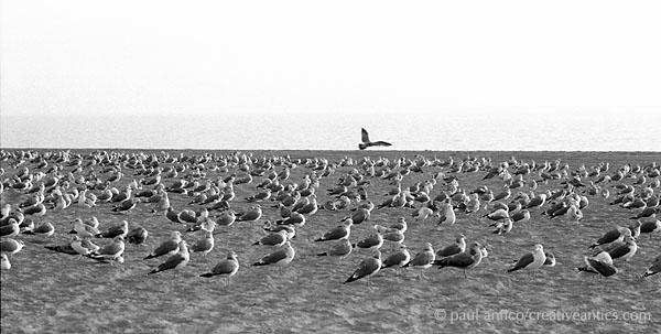 birds_one_above