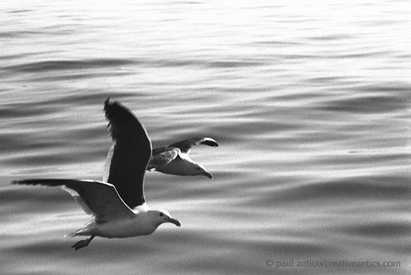 contentment_birds