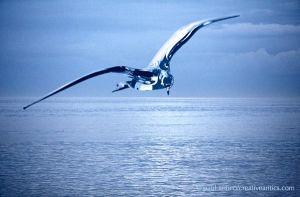 Glass Bird Ocean